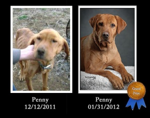 Penny-Before-After-01